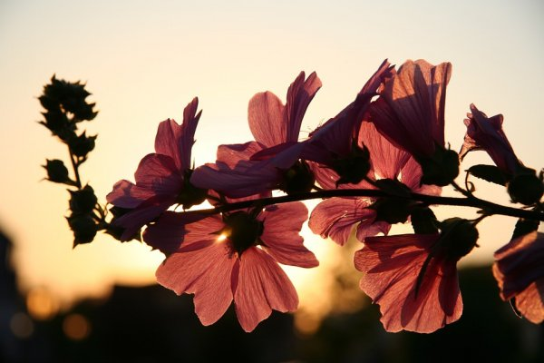 Six Ways to Blossom Into Your Soul's Purpose